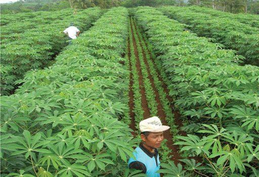 Pemkab Morotai Sediakan Puluhan Ribu Hektare Lahan untuk Cadangan Pangan
